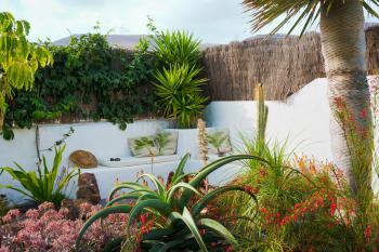 Garten mit vielen tropischen Pflanzen